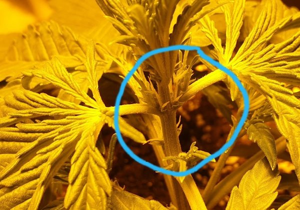GG flowering 1.jpg