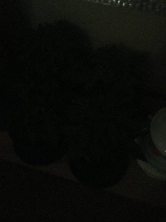 5D7E3887-0710-48E8-BD02-44601C074E60.thumb.jpeg.290a4360f10011a31360b12c663ea285.jpeg