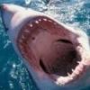 Shark byte